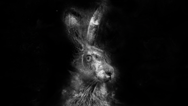 Hares_Breath_Records